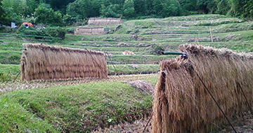 Tsukibuse Terraced Rice Fieldsの画像