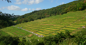 Ogura Senmaida (terraced rice fields)の画像