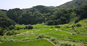 Katanoo Terraced Rice Fields