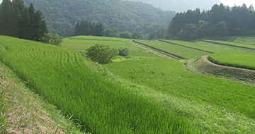 Saruhachi Terraced Rice Fields