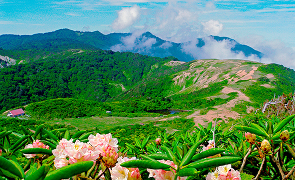 Lush with beautiful wild plants, Mt. Donden is popular among hikers.