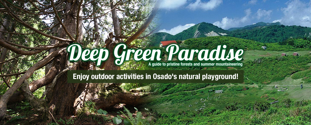 Enjoy yourself in Osado's deep green playground!
