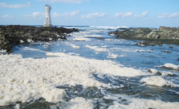 White flowers-of-the-waves are a signature scene of a Sado winter.